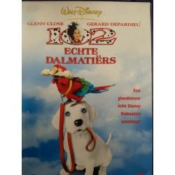 102 Echte Dalmatiers